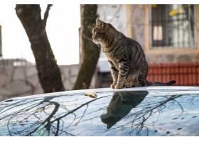 棕色镶边猫坐被捕获在秋天期间的汽车_13210756