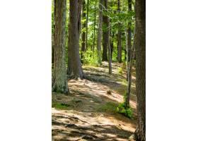 绿色树垂直射击和一个泥泞的路在一个美丽的_7848327