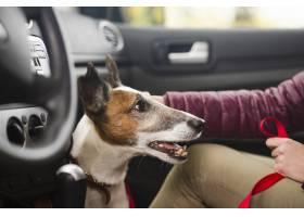 与所有者的逗人喜爱的狗在汽车_5864487