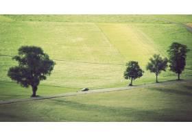 草甸的宽射击有树的和驾驶在轨道的汽车_8039151