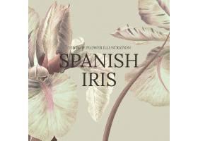花卉模板用西班牙虹膜背景从公共领域艺术_16406137