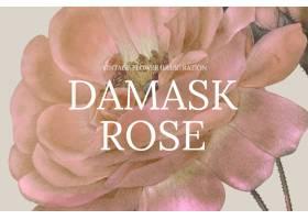 葡萄酒花卉模板与锦缎玫瑰色背景的传染媒介_16265626