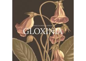 葡萄酒花卉模板例证用格洛尼亚背景从公共_16406141