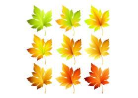套五颜六色的秋叶_14087911