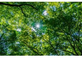 美丽的绿色树和叶子在有太阳的森林里_4188035