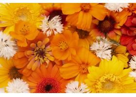 美丽的花壁纸的构成_16855028