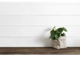 室内植物的交付服务到主页_17229118