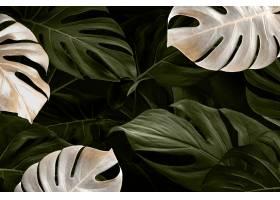 Monstera叶子豪华社会媒介横幅热带丛林背景_13311415