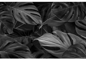 黑色猴子叶子背景壁纸_15550631