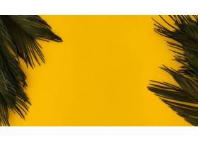 绿色热带棕榈叶在明亮的黄色背景_5042339