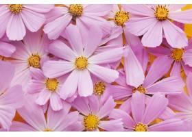 美丽的鲜花安排壁纸_16855073