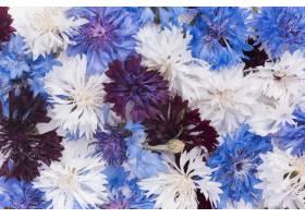 美丽的鲜花安排壁纸_16855074