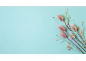 自然植物的极简主义构成单色背景的_13762051
