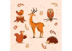 秋季动物收藏_16391252