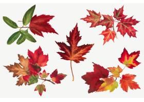 秋叶集合植物插图从玛丽Vaux沃尔科特的艺_16279555