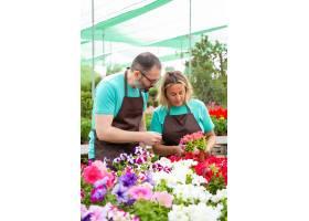 工作在温室和检查花的严肃的园丁_13996287