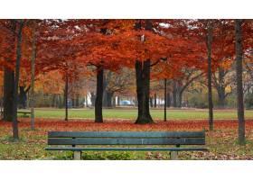 五颜六色的叶子和树围拢的公园与一个长木凳_9851793