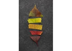 顶视图由不同的色的叶子制成_11282070