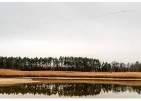 草和高大的树围拢的湖的美丽的景色在与鸟的_10292634