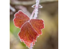 选择聚焦射击了与美丽的红色秋叶的一个分支_10119447