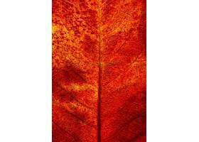 秋天叶子平的位置特写镜头_12356800