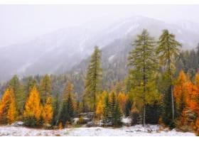 秋天树美好的风景在冬天期间_10809779