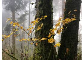 树枝与树围拢的黄色叶子_11061991