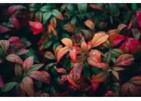 特写镜头射击了五颜六色的秋叶在庭院里_13006560