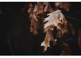 干燥秋叶背景_10187079