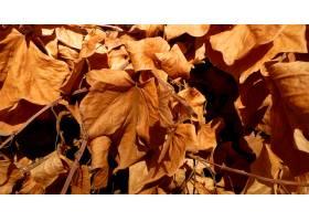 干燥秋叶背景_11875473