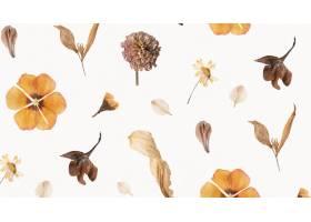 天然干花壁纸图案_11303123