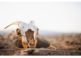 可怕山羊头骨在有白色天空的沙漠_11358448