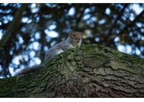 低角度特写镜头射击了一只逗人喜爱的灰鼠在_13962665