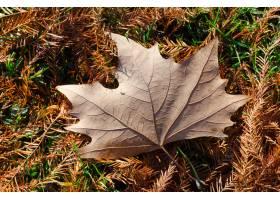 高角度射击了一个美丽的秋季叶子下落在叶子_10810018