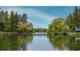 美丽的风景射击了树围拢的一个绿色湖在和平_13382438