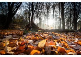 覆盖在树围拢的地面的干叶子特写镜头在秋天_10758940