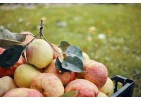 许多大绿色和红色苹果刚刚从秋天的庭院苹果_11284642