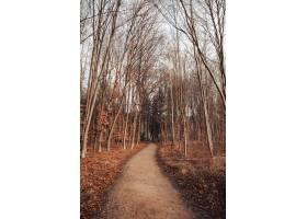 路在叶子和树围拢的森林里在多云天空下_10419810