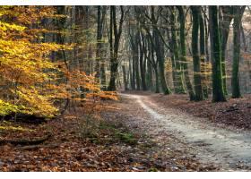 途径在树和叶子围拢的森林里在阳光下在秋天_11890856