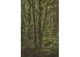 绿色植物围拢的一个生苔树的垂直的射击在森_10119750