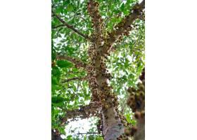 特写镜头低角度看法厚实的叶子围拢的群集树_10860346