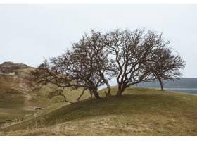 特写镜头射击了在一个绿色风景的一棵树在一_10119410