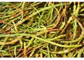 特写镜头射击了在地面上的绿色植物在森林里_10186027