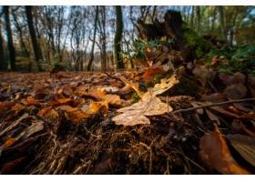 特写镜头射击了在森林地板上的下落的橡木叶_10637262