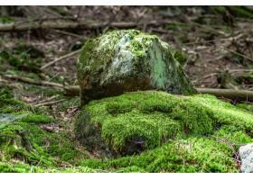 特写镜头射击了生苔岩石在森林里_15695701