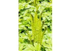 生长在领域的其他植物旁边的绿色蕨垂直的射_11678357