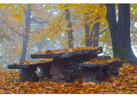 石桌和长凳在五颜六色的叶子和树围拢的森林_11183094