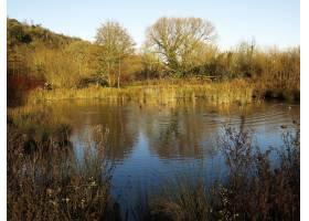 树围拢的一个美丽的湖的高角度射击在秋天_10303955