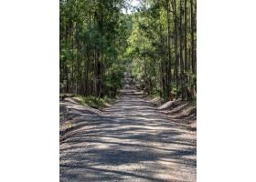 树围拢的一条路的垂直的图片在阳光下的森林_9931704