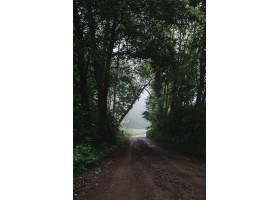 森林公路的垂直的射击在有雾的天气期间的_12909637